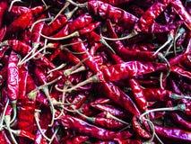 Getrockneter Paprika stockfotografie
