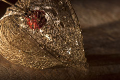 Getrockneter Physalislaternenabschluß oben Lizenzfreie Stockfotografie