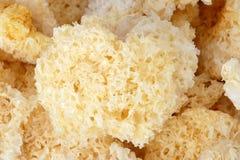 Getrockneter Pilz stockbild
