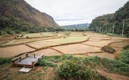 Getrockneter Reis archiviert nach Ernte in der Wintersaison Stockfotos