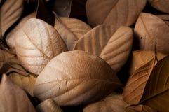 Getrockneter schöner Hintergrund der Blätter Stockfoto