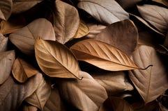 Getrockneter schöner Hintergrund der Blätter Lizenzfreie Stockfotografie