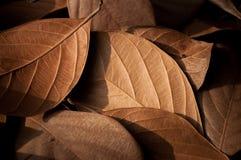 Getrockneter schöner Hintergrund der Blätter Stockfotos