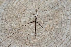 Getrockneter Schnitt der Baumstamm zur alten Stumpfoberfläche Stockbilder