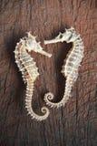 getrockneter Seahorse auf hölzernem Hintergrund Stockbild