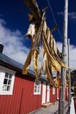 Getrockneter Stockfish auf Lofoten lizenzfreie stockbilder