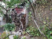Getrockneter toter Baum Stockfoto
