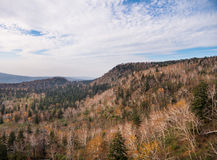 Getrockneter Wald Stockbilder
