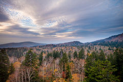 Getrockneter Wald Lizenzfreie Stockbilder