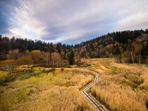 Getrockneter Wald Stockfotos