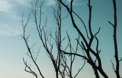 Getrocknetes Baumschattenbild mit Himmel Stockfotos
