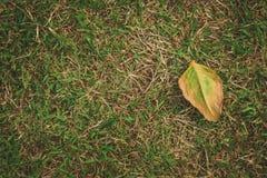 Getrocknetes Blatt auf Grasboden in der Spitzenwinkelsicht stockfoto