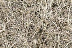 Getrocknetes braunes Gras lässt Beschaffenheitshintergrund auf dem Boden Stockbild