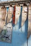 Getrocknetes eel2 Stockfotografie
