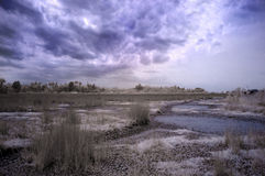 Getrocknetes Feuchtgebiet Stockbild
