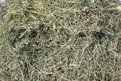 Getrocknetes Gras Lizenzfreies Stockfoto