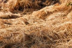 Getrocknetes Gras auf dem Berg Stockbilder