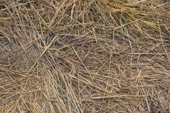 Getrocknetes Gras auf dem Feld Stockfotografie