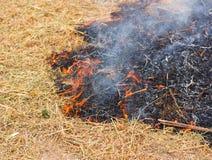 getrocknetes Gras des Feuers Lizenzfreie Stockfotografie