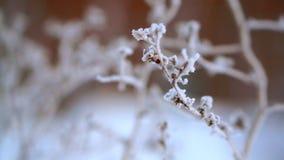 Getrocknetes Gras im Schnee und im Frost, sehr kalt Schwerer Frost in Alaska stock footage