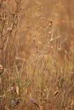 Getrocknetes Gras und Blumen Lizenzfreies Stockbild