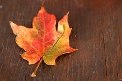 Getrocknetes Herbstblatt auf Holz Stockbild