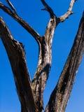 Getrocknetes Holz gegen den Himmel Stockbild