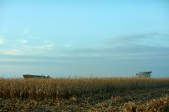 Getrocknetes Maisfeld, das an der Dämmerung geerntet wird stockbilder