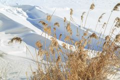 Getrocknetes Schilf auf einem Hintergrund von großen Schneewehen an einem sonnigen Wintertag Stockbilder
