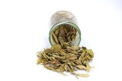 Getrocknetes Stevia Stevia rebaudiana Bertoni verlässt gegossen aus einem Glasgefäß heraus, das auf weißem Hintergrund lokalisier stockfotos