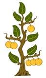 Getrokken appelen met bladeren op de boom Royalty-vrije Stock Afbeelding