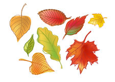 Getrokken Autumn Leafs Stock Foto's