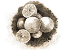 Getrokken citroenen Stock Afbeelding