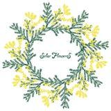 Getrokken de hand bloeit mimosa Vector stock afbeeldingen