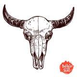 Getrokken de Hand van de buffelsschedel Stock Afbeelding