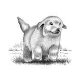 Getrokken de hand van de puppyhond Stock Foto's