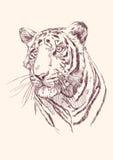 Getrokken de hand van de tijger Royalty-vrije Stock Afbeeldingen