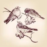Getrokken de hand van de vogel vector illustratie