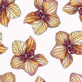 Getrokken de orchidee naadloos patroon van het kleurenpotlood hand op witte backgro Royalty-vrije Stock Foto's