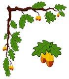 Getrokken eiken tak met bladeren en eikels Stock Afbeelding
