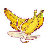 getrokken fruithand Stock Fotografie