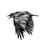 Getrokken geïsoleerde vlieg zwarte kraaien vector illustratie