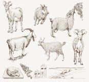 Getrokken geit vectorhand Stock Afbeelding