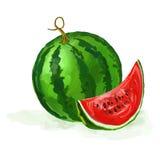 Getrokken hand van de watermeloen de vectorillustratie Stock Fotografie