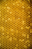 Getrokken honingskam royalty-vrije stock afbeelding