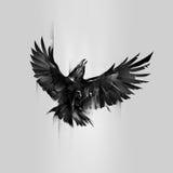 Getrokken omhoog vliegend raaf op een grijze achtergrond Royalty-vrije Stock Fotografie