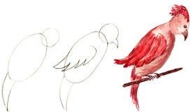 Getrokken papegaai Stock Afbeelding