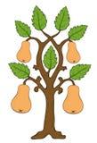 Getrokken peren met bladeren op de boom Royalty-vrije Stock Foto's
