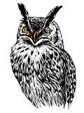 Getrokken uilhand, zwart-witte geïsoleerde vectorillustratie Royalty-vrije Stock Afbeelding
