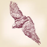 Getrokken vectorllustrationschets van Eagle hand vector illustratie